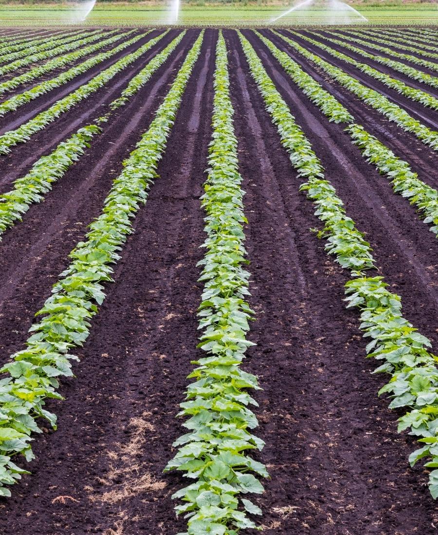 https://www.micronizadosadelacruz.com/wp-content/uploads/2021/06/agricultura.jpg